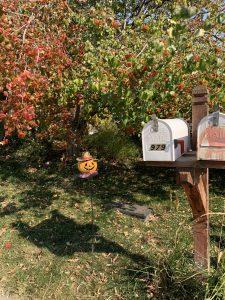 pumpkin at mailbox